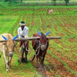 India ranks first in number of organic farmers and ninth in terms of area under organic farming