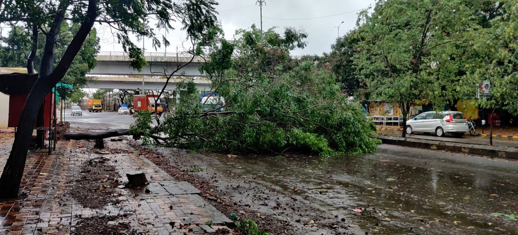 tree fall due to rain