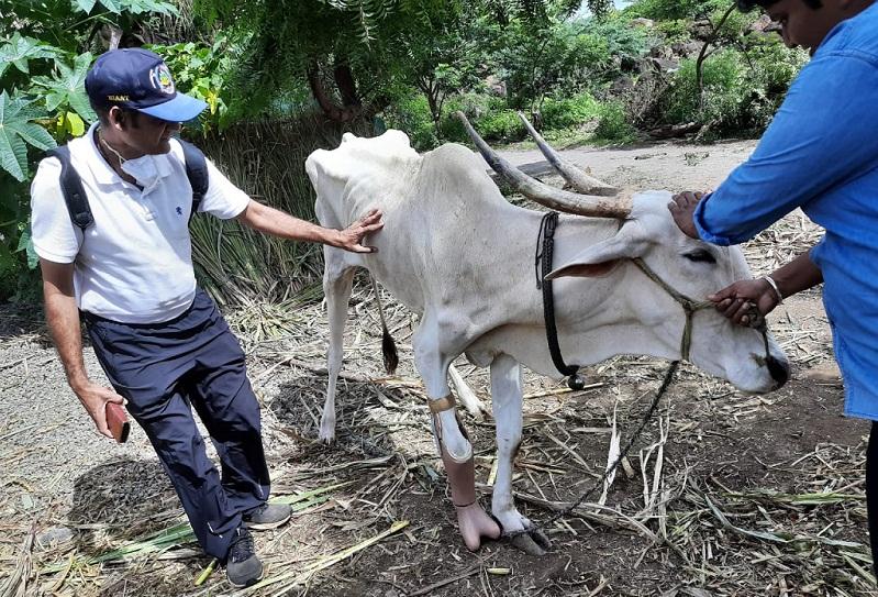 Salil Jain with Cow
