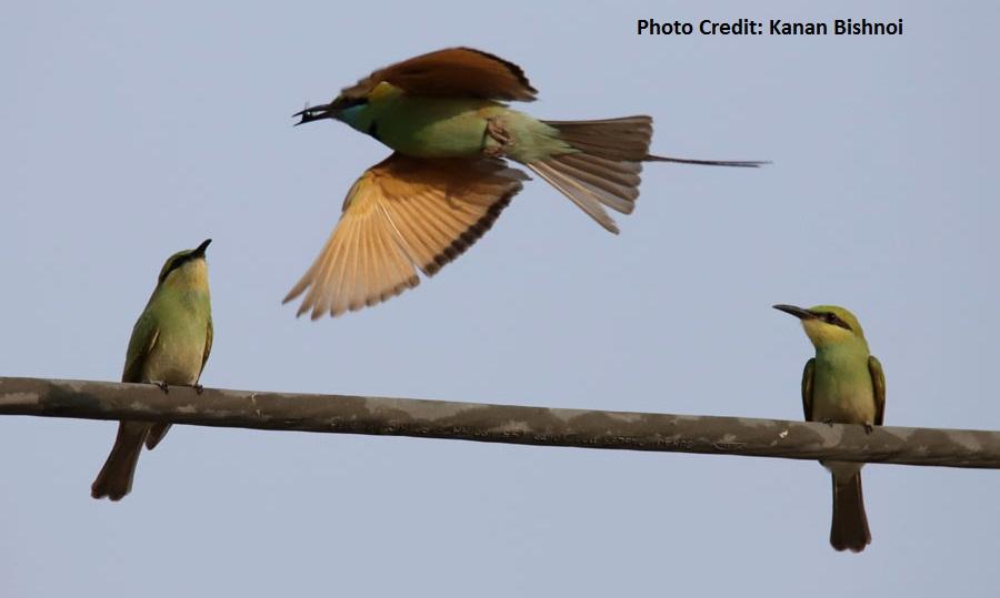 Pune birds